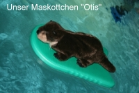 Otis surft